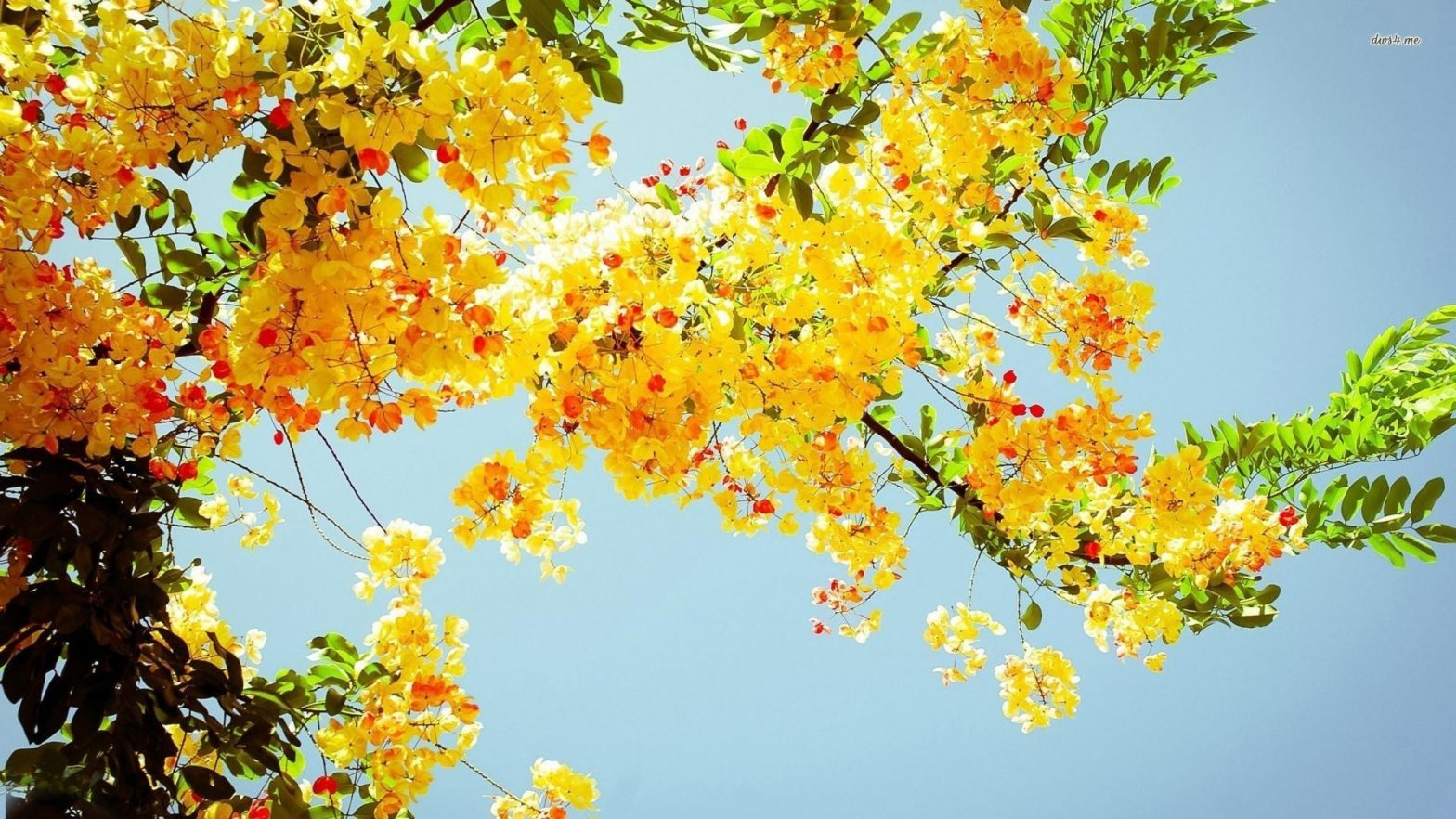 yellow flowers amidst the sky